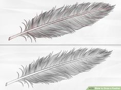 How to Draw a Feather: 8 Steps (with Pictures) - wikiHow