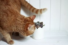 he loves plants Peter Pan, Kitten, Graphic Design, Cats, Animals, Cute Kittens, Kitty, Gatos, Animales