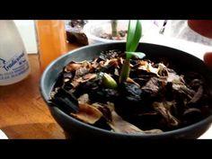 Aprenda de forma muito simples e fácil a fazer uma UTI em orquídea. Nossa página https://www.facebook.com/orquideoterapia Já somos mais de 25 mil apaixonados...