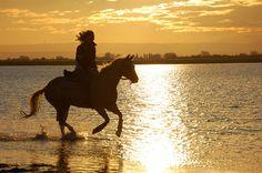 Reiten im Burgenland ist Freiheit mit Sonne drin! © Burgenland Tourismus Sport, Sailing, Swimming, Freedom, Tourism, Cycling, Horseback Riding, Sun, Deporte