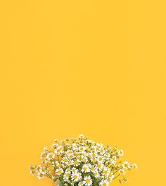 Monday blooms