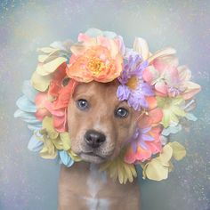 'Pit Bull Flower Power' Already Found Homes For Pits (New Pics) All Dogs, I Love Dogs, Cute Dogs, Dogs And Puppies, Doggies, Animals And Pets, Cute Animals, Pitbull Pictures, Tela