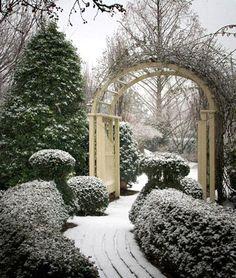 winter's first snowfall in the garden.