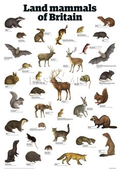 Land mammals of Britain Art