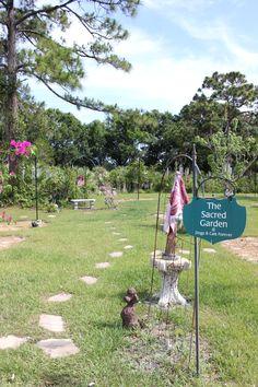 #cat #dog #nokillshelter #adoptadog #saveadog #ftpierce #florida #dogsandcatsforever www.dogsandcatsforever.com