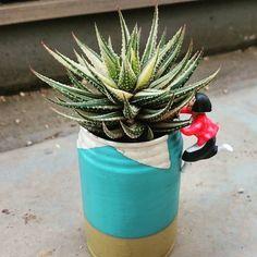 今日の多肉 うちのスネ夫 こいつは斑が綺麗 あまり変化のないやつだと思ってたら 過去と比べると一回り大きくなってた 何気なくすち子も入れて撮ったら すべて頂き物という #この缶に #大阪のおばちゃん #すち子を入れて撮ったのは #特に深い意味はありません #あしからず  #金城#ハオルチア#haworthia  #cactus#succulent#plants#多肉植物#サボテン #リメ缶#リメイク缶#DIY#バカリメ缶 #すち子#スネ夫#ドラえもん #リメ缶わらしべ長者 #嫁入り多肉の成長報告 by katahide158