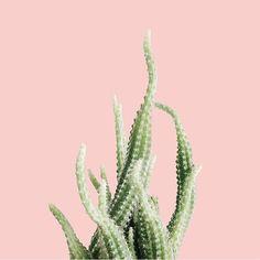 #PlantsOnPink by @milkkeun