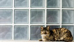Cat on window sill by Marian Gorgovan on 500px