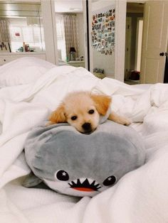 Pet Dogs - Carrie and friends - perros Super Cute Puppies, Cute Baby Dogs, Cute Little Puppies, Cute Dogs And Puppies, Cute Little Animals, Cute Funny Animals, Pet Dogs, Doggies, Funny Puppies