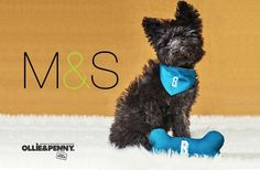 It's that time of year again and although currently we can't get out and into the shops (level 5 lockdown) we can still shop online! Marks & Spencer have launched their pet range of gifts... Level 5, Looking Dapper, Designer Toys, Your Pet, Christmas Gifts, Plush, Shops, Product Launch, Range