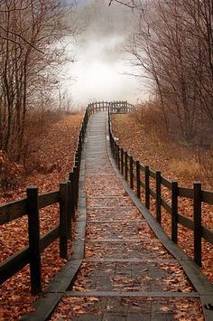 lake view in fall... - Click image to find more Photography Pinterest pins
