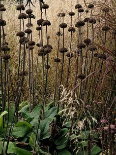 Piet Oudolf. His planting is painterly and perfect for a seed-head obsessive like me.