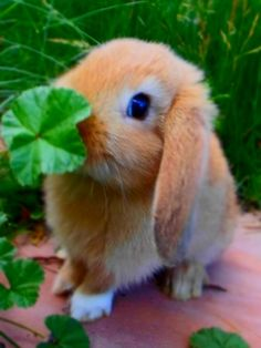 254 best baby bunnies images on pinterest rabbits cutest animals