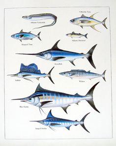 Atlantic Cutlassfish Yellowfin Tuna Swordfish by mysunshinevintage