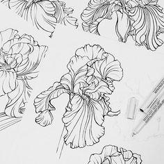 #iris #flowers #botanical #sketch #workinprogress #floral #blackandwhite #drawing #handdrawn #textiledesign