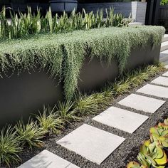 Dichondra Silver Falls playing its roll again by soften the edges of this retaining wall Modern Landscaping, Outdoor Landscaping, Front Yard Landscaping, Outdoor Gardens, Landscaping Ideas, Landscape Edging Stone, Garden Landscape Design, Terraced Patio Ideas, Terraced House