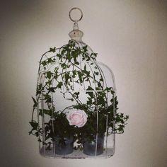 #birdcage