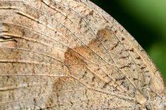 papillon / photo :: Ploline