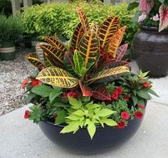 fall container garden idea jodeze gardening pinterest. Black Bedroom Furniture Sets. Home Design Ideas