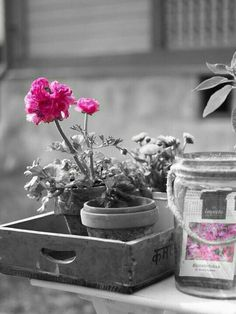 Start the day with love. Pink Photo, Photo B, Black And White Pictures, Black And White Colour, Color Splash, Color Pop, Miss World, Start The Day, Nature Wallpaper