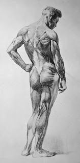 Exceptional Drawing The Human Figure Ideas. Staggering Drawing The Human Figure Ideas. Male Figure Drawing, Figure Sketching, Figure Drawing Reference, Guy Drawing, Anatomy Reference, Drawing Poses, Life Drawing, Pose Reference, Drawing Tips