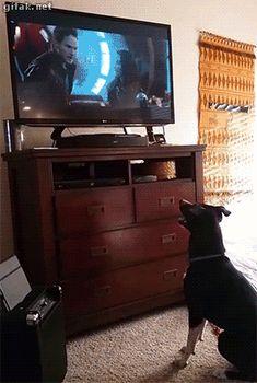 Quando meu cachorro identifica alguém da TV