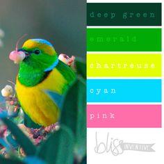 {COLOUR POP} Bright Colour Palettes to Inspire!