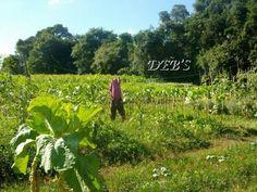 Farm!!