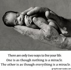 This tiny miracle of Life