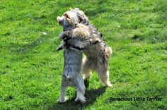 Appropriate and Good Play #Dog Behavior