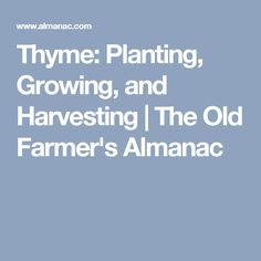 Thyme: Planting, Growing, and Harvesting   The Old Farmer's Almanac