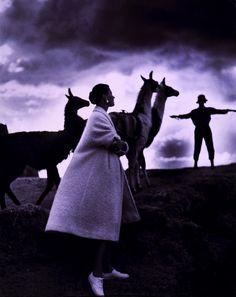 Toni Frissell, Model with llamas, Peru, 1952