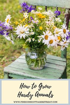 Learn all about growing hardy annual flowers. These plants will have flowers blooming in your garden earlier than ever. Annual Flowers For Shade, Shade Flowers, Tall Plants, Growing Seeds, Garden Items, Seasonal Flowers, Annual Plants, Growing Flowers, Zinnias
