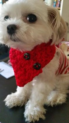 Small Toy breed Dog or CatCrocheted scarf Red by QuiltNCrochet