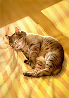 Makoto Muramatsu cat