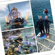 Mondays Great Barrier Reef snorkelling adventure. #greatbarrierreef #whitsundays #snorkelling #reefworld #cruisewhitsundays #instacollage #Padgram