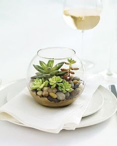 cute succulent plant display