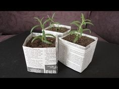 One way to reduce transplant shock is to start plants in peat pots or soil blocks. Here's how to make your own biodegradable pots using newspaper. [DETAILS]