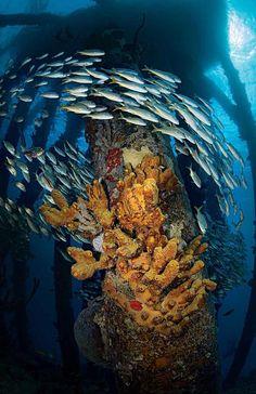 Pet Supplies Fish & Aquariums Industrious Resin Artificial Aquarium Easter Island Statue Decorated Underwater Landscape Be Novel In Design