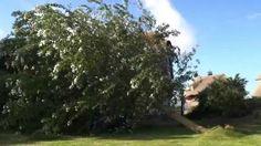 Zerstörung durch Sommersturm in Makkum