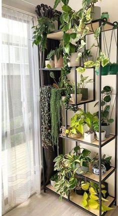 Room With Plants, House Plants Decor, Plant Decor, Room Ideas Bedroom, Bedroom Decor, Plantas Indoor, Plant Shelves, Aesthetic Room Decor, Indoor Plants