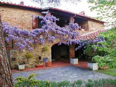 I will one day have a wall covered with wisteria