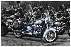 'Harley' by gawiebooysen Motorcycle, Vehicles, Biking, Car, Motorcycles, Motorbikes, Vehicle, Choppers, Tools