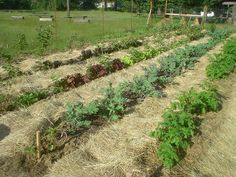 Sharing Gardens - new: The Benefits of Deep Mulching