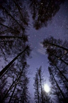Trees, moon and starry purple sky . Beautiful Sky, Beautiful World, Beautiful Places, Galaxy Wallpaper, Wallpaper Backgrounds, Purple Sky, Stargazing, Night Skies, Sky Night