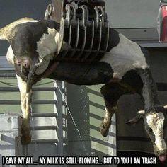 Please go vegan