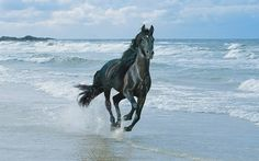 Hintergrund mit pferd auf dem strand