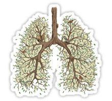 Lungs Sticker
