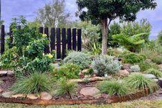 Portfolio: Norah Head Consult - Mallee Design Australian Garden Design, Australian Native Garden, Bush Garden, Garden Trees, Front Garden Landscape, Front Yard Landscaping, Backyard Landscape Design, Garden Bed Layout, Baumgarten