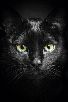( The Black cat )
